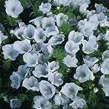 Echium Plantagineum White Bedder Viper's Bugloss Flower Seeds for Home and Garden #PLT