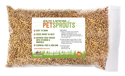 Wheatgrass Seeds - Cat Grass Seeds, Hard Red - Grass Seed For Cats