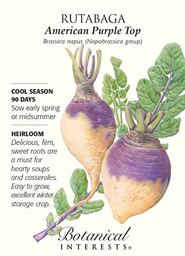 - Botanical Interest - Rutabaga American Purple Top
