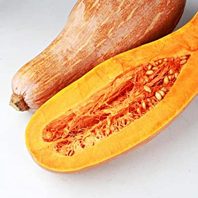 Long Neck Pumpkin Seeds, Butternut Squash Seeds- Non-GMO, Heirloom Vegetable Seeds for Garden Farm Yard : Garden & Outdoor