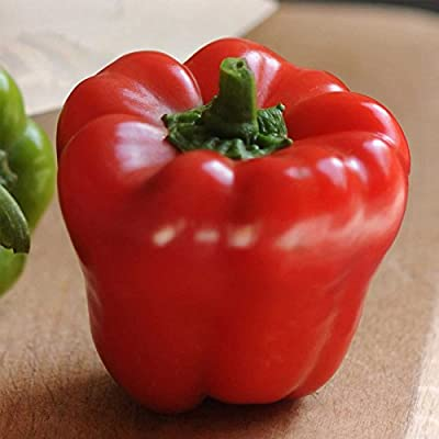 Cute Stuff Red - Sweet Pepper Garden Seeds - 100 Seeds - Non-GMO - Red Mini Bell Peppers - Vegetable Gardening Seed - High Yield