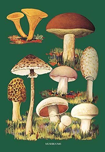 - Buyenlarge Mushrooms #1 Gallery Wrapped Canvas Print, 12