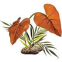 Komodo Rainforest Canopy 38cm