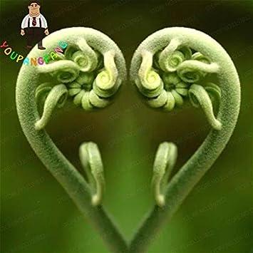 tohum comestible verde vegetales semillas raras Love helecho semillas vides plantas trepadoras para casa jardín planta Ornamental Semillas 100 piezas/bolsa: ...