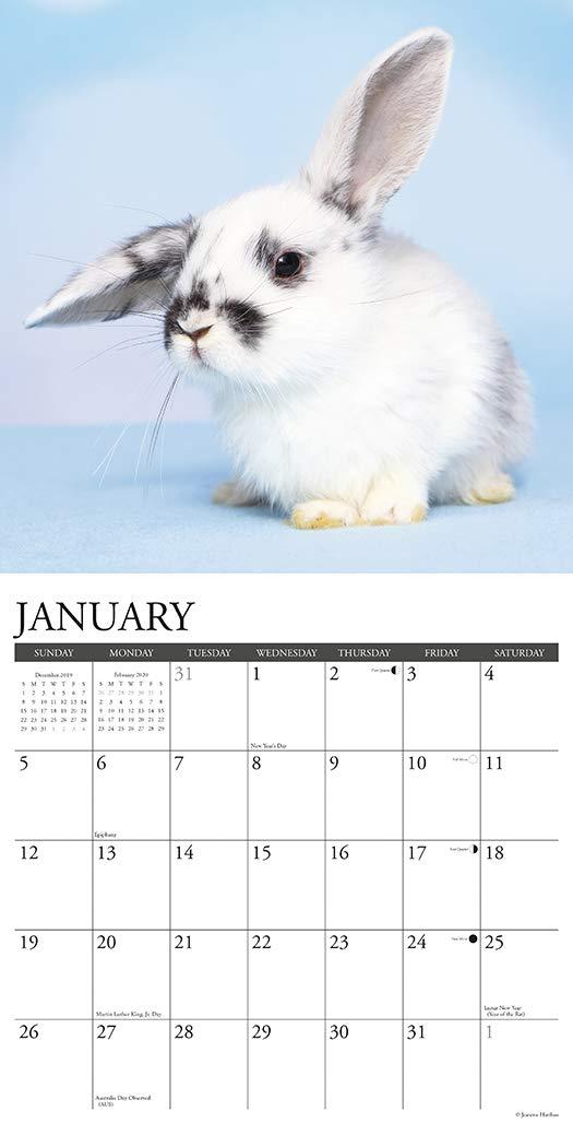 """Willow Creek Bunnies 2020 Wall Calendar 18 Months 12/""""X12/"""" w"""