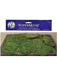 Amazon Com Moss Control Patio Lawn Amp Garden