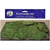 Super Moss Preserved Bright Green Natural Sheet Moss Country Primitive Craft Floral Décor