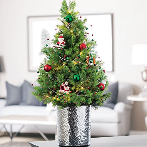 Jackson & Perkins Celebrations by Radko Christmas Tree in Silver Container - Live Tabletop Christmas Tree - Alberta Spruce - Christmas Live Trees