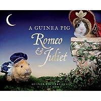 A Guinea Pig Romeo & Juliet