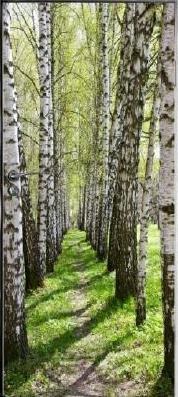 Fototapete birkenrinde  Fototapete Birkenwald Birkenrinde, dunkle Rinde der Birke als ...