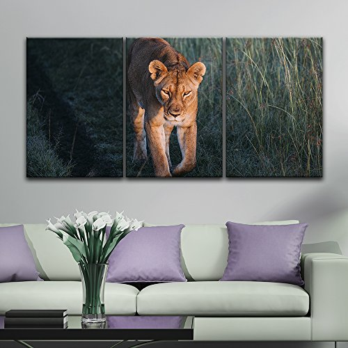 3 Panel A Lion Walking in the Wild Gallery x 3 Panels