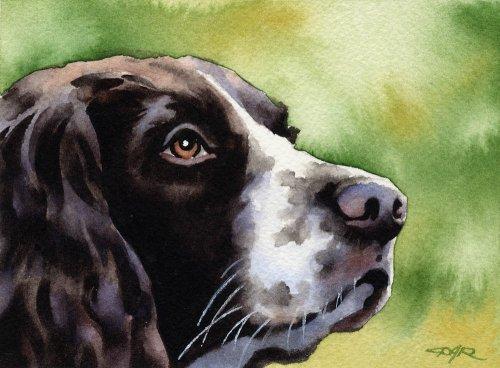 """Springer Spaniel"" Dog Art Print Signed by Artist DJ Rogers"