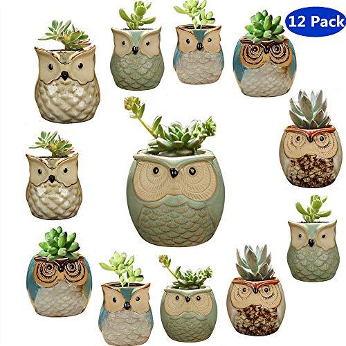 YLINGSU 2.5 Inch Owl Succulent Plants Pots Ceramic Set, Cactus Plant Pot,Mini Flower Pot, with A Hole Perfect owl Gifts (12 Pack) (For Pots Succulent Sale)