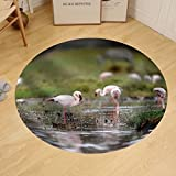 Gzhihine Custom round floor mat Flamingo in Lake Nakuru National Park Africa