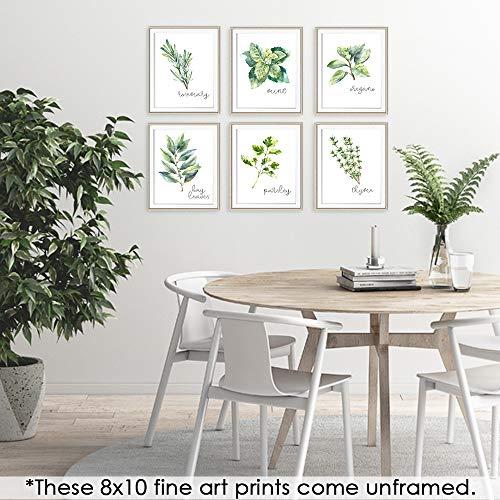 Kitchen herbs prints