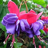 Go Garden BELLFARM 35+PCS Hanging Fuchsia Flowers, 24 Types Bonsai Fuchsia Magellanica Boliviana Purple Red Black Colorful Garden: BD911HxT10