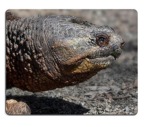 Liili Mouse Pad Natural Rubber Mousepad IMAGE ID: 4602611 Common Snapping Turtle (Snapping Turtle Shell)