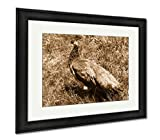 Ashley Framed Prints Beautiful Big Peacock In A Milwaukee Zoo, Modern Room Accent Piece, Sepia, 34x40 (frame size), Black Frame, AG6458596
