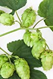 Humulus Lupulus Cascade (Hops), Starter plant liner plug (1 Tray (72 - 2'' plants))