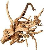 Galapagos (05319) Spider Wood, Natural, 12
