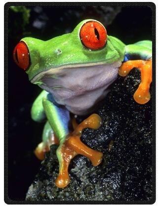 Fashion Design Blake Fleece Plush Blanket Cute Tree Frog Blanket 58