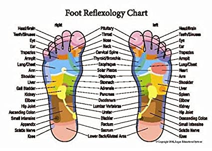 Professional Hand And Foot Reflexology Acupressure Pocket Guide