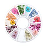12 Types Dried Flower Nail Art Design Colorful Natural Dried Flowers Set Real Dry Flowers Nail Decoration Manicure Arts