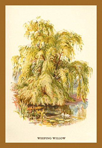 ArtParisienne Weeping Willow Salix Babylonica W.H.J. Boot 12x18 Poster Semi-Gloss Heavy Stock Paper Print
