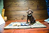 Browning Dog Crate Mat Hunting Dog Crate Mat, Realtree Camo, 30'X17', Max, Large