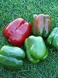 75+ California Wonder Pepper Seeds- Heirloom Variety