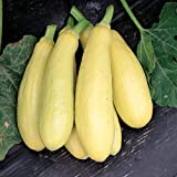 David's Garden Seeds Squash Summer Early Prolific Straightneck SL1149 (Yellow) 50 Non-GMO, Heirloom Seeds