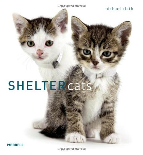 Shelter Cats