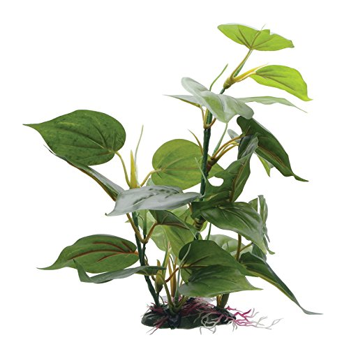 Fluval Anubias Plant for Aquarium, 12-Inch by Fluval