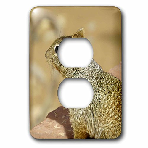 Jos Fauxtographee- Squirrel - A squirrel sitting on a rock wall at the trail in Zion National Park - Light Switch Covers - 2 plug outlet cover - Zion Outlets At