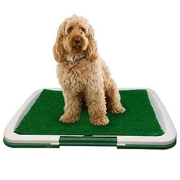 YIZHEN Cojines De Adiestramiento para Perros De Uso Doméstico para Perros Hierba Sintética No Tóxica,