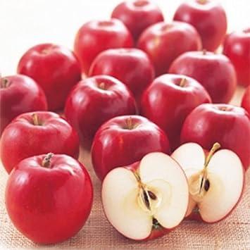 Amazon   林檎(リンゴ)苗木 紅玉   果物