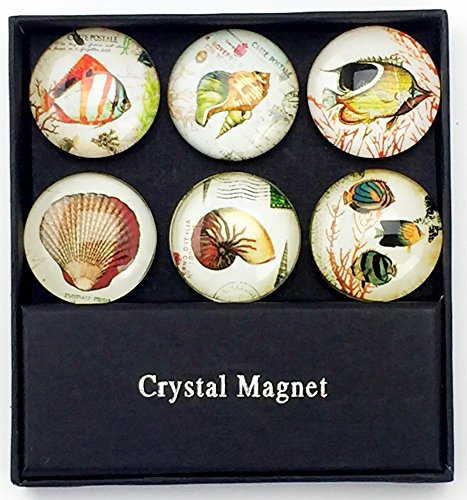 Value Arts Glass Dome Assorted Tropical Fish Magnets, Set of 6