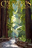 Calaveras Big Trees State Park - Pathway in Trees (9x12 Collectible Art Print, Wall Decor Travel Poster)