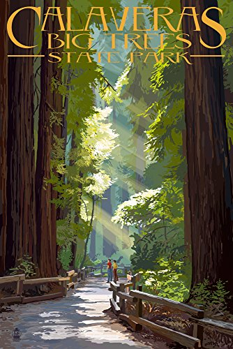 Calaveras Big Trees State Park, California - Pathway in Trees (12x18 Art Print, Wall Decor Travel Poster)