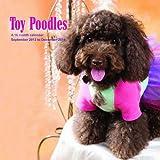 Toy Poodles 2014 Wall Calendar
