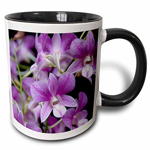"3D Rose mug_74035_4 ""Singapore, National Orchid Garden -AS32 CMI0078 - Cindy Miller Hopkins"" Two Tone Black Mug, 11oz, Black/White"