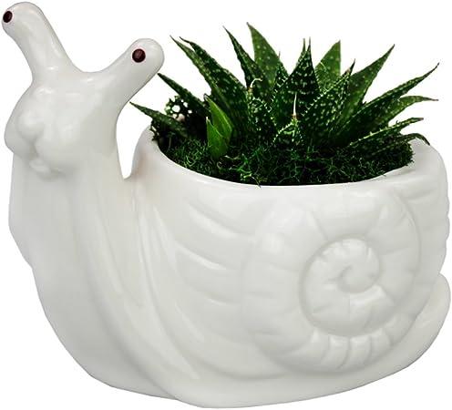 Flower Pot Snail Ceramic Planter Cute Animal Home White Mini Flowerpot
