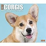 Just Corgis 2018 Daily Desk Boxed Calendar