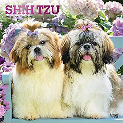 Shih-Tzu-2020-12-x-12-Inch-Monthly-Square-Wall-Calendar-with-Foil-Stamped-Cover-Animals-Small-Dog-Breeds