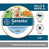 Seresto flea collar for cats - 8-month flea and tick prevention for cats 10 weeks of age and older