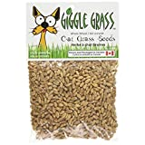 Giggle Grass Cat Grass Seeds 125 gm