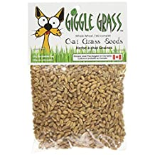 Giggle Grass Cat Grass Seeds 125 gm