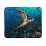ALAZA Sea Turtle Fish Plush Throws Siesta Camping Travel Fleece Blankets Lightweight Bed SOFE Size 50x60inches