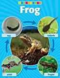 Scholastic TF2453 Frog Life Cycle Photo Chart