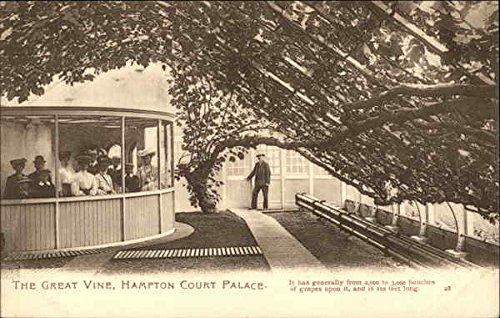 The Great Vine - Hampton Court Palace Gardens Surrey, UK Original Vintage Postcard